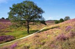 The Veluwe is a forest-rich ridge of hills